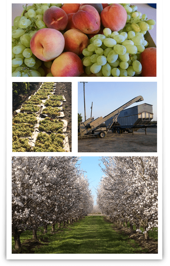 Insurance for crop protection including grapes, peaches, stonefruit